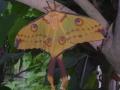 vlinders15
