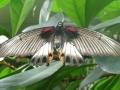 vlinders3
