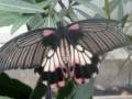 vlinders5
