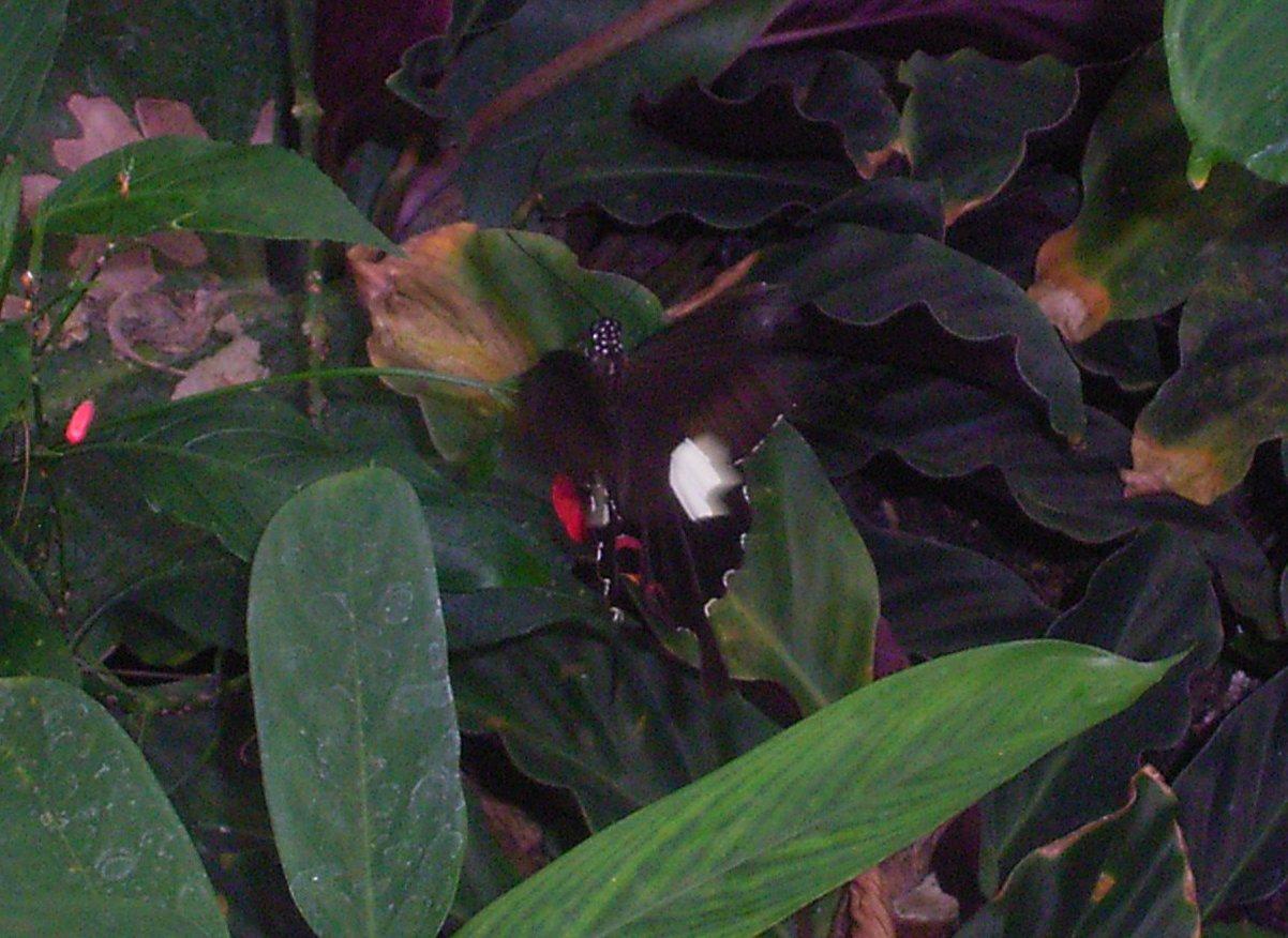 vlinders10b