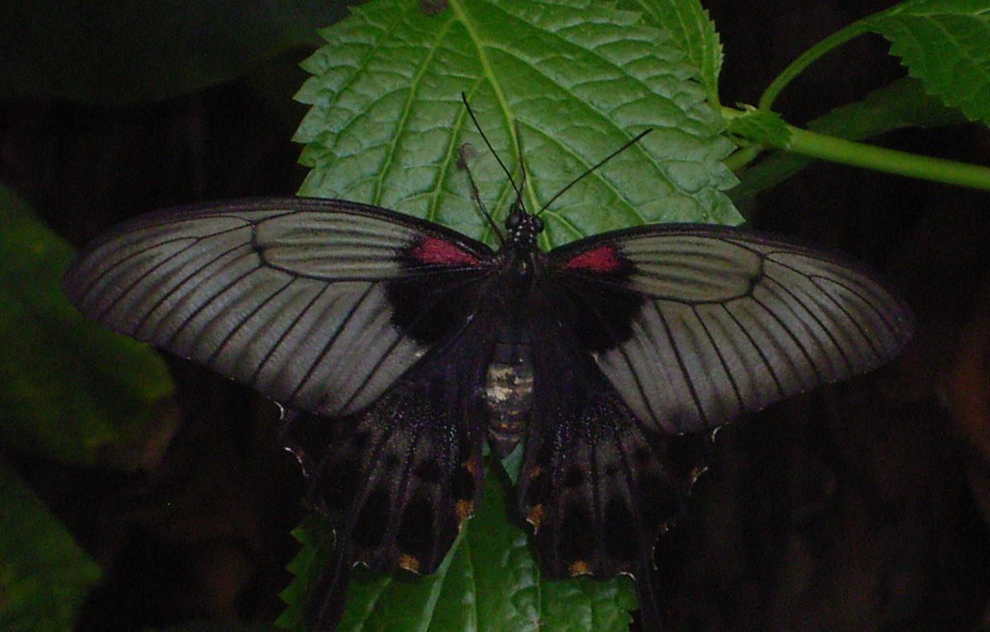 vlinders12