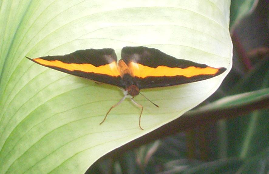 vlinders14