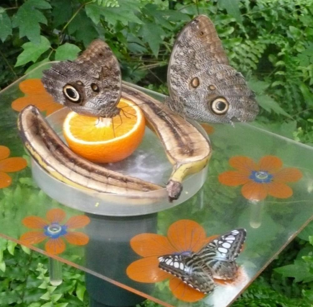 vlinders4