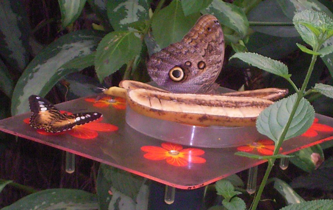 vlinders9
